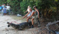 Croc # 32 AKA Barry was first captured in April 2011 when ACES received complaints that the animals was eating local dogs. (Photo 18 of 19 photo(s)).