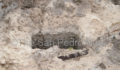 Human-Skeletal-Remains-07 (Photo 1 of 8 photo(s)).