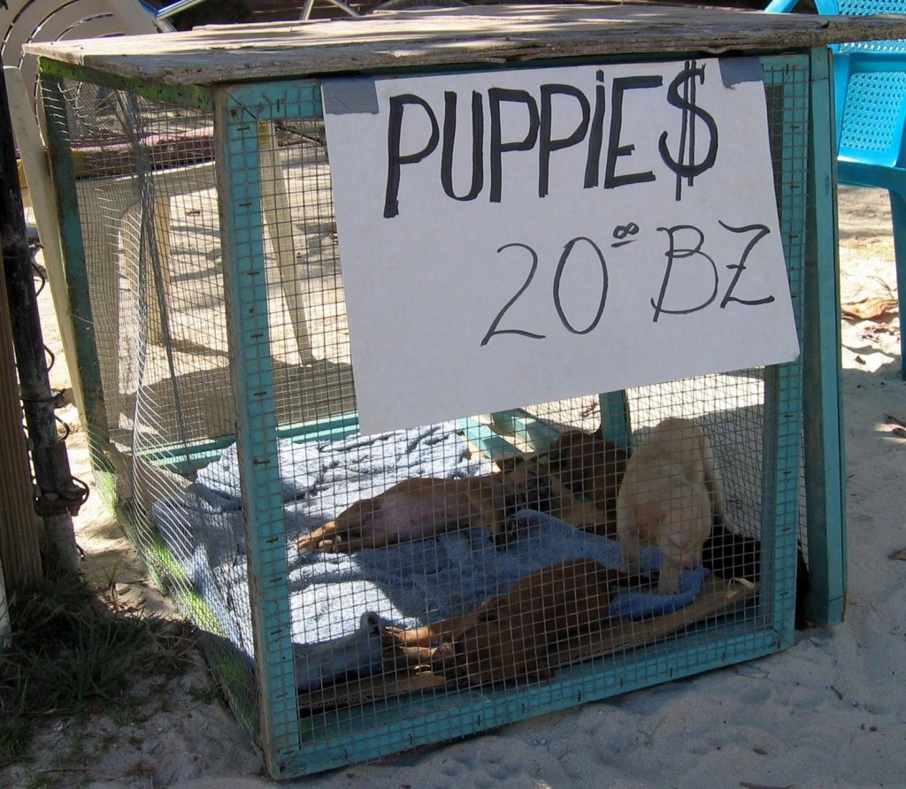 Cheap dog neutering