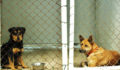 46 4 Saga Shelter Dogs waiting for the perfect forever home (Photo 1 of 4 photo(s)).