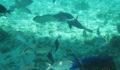 belize-snorkeling-4 (Photo 9 of 12 photo(s)).