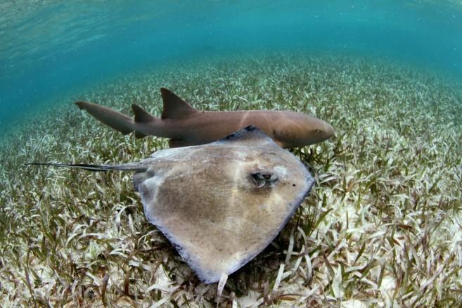 14 Stingray-Shark