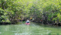 2012 Lagoon Reef Eco-Challenge Kayak Race 33 (Photo 154 of 186 photo(s)).