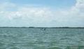 2012 Lagoon Reef Eco-Challenge Kayak Race 55 (Photo 132 of 186 photo(s)).