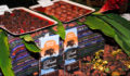 Toledo Cacao Festival 2012 4 (Photo 122 of 244 photo(s)).