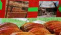 Toledo Cacao Festival 2012 88 (Photo 38 of 244 photo(s)).