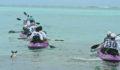 Eco Pro Kayak Race 2012 2 (Photo 2 of 53 photo(s)).