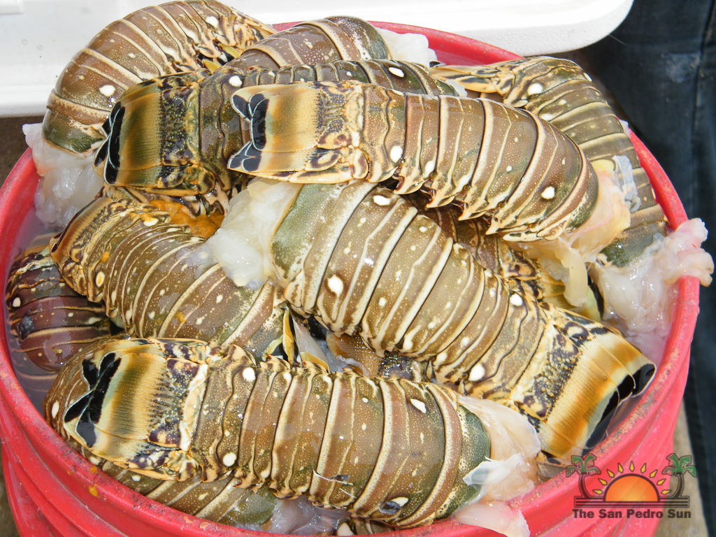 Lobster Season 2012 Opens 11