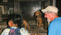 Saga and SPTC round up stray dogs in San Pedro 2 (Photo 5 of 6 photo(s)).
