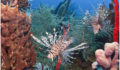 47 The Lionfish (Photo 3 of 10 photo(s)).