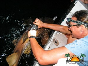 Shark Tagging Rachel Graham-11