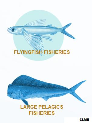 Flying Fish Pelagic