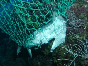 Ghost net on the reef 2