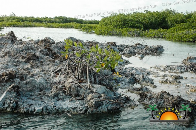 Dredging-on-North-Ambergris-Caye-5