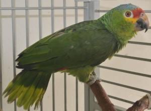 21 Parrot Poaching 2