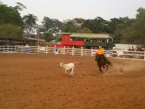 Agric-Show-Rodeo