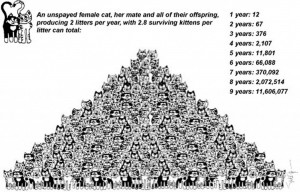 Cat-Population-Pyramid