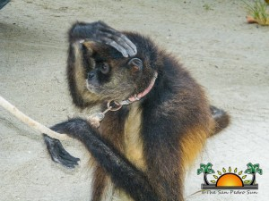 Spider Monkey Rescue-9