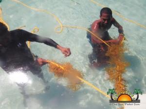 Placencia Seaweed Farming-3