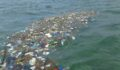 Caye Caulker Garbage2 (Photo 3 of 4 photo(s)).