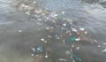 Caye Caulker Garbage4 (Photo 1 of 4 photo(s)).