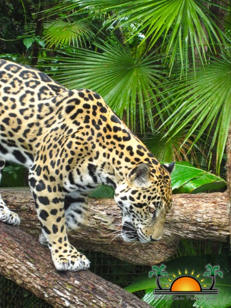 The Belize Zoo-16