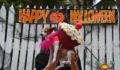 Saga Halloween 2013-30 (Photo 13 of 42 photo(s)).