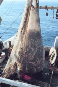 47 Fish_on_Trawler