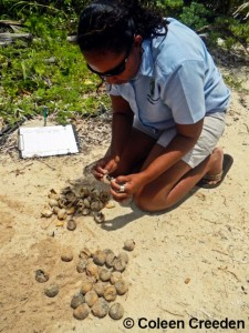 2013 Turtle Monitoring-2