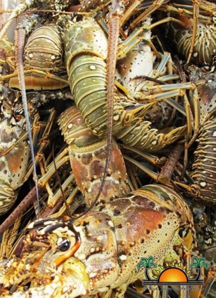 07 Lobster-2