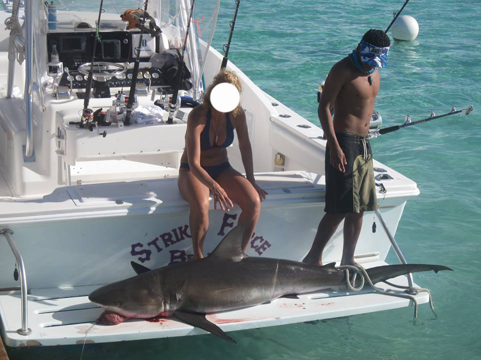 Concerns raised after a bull shark was fished by local tour company