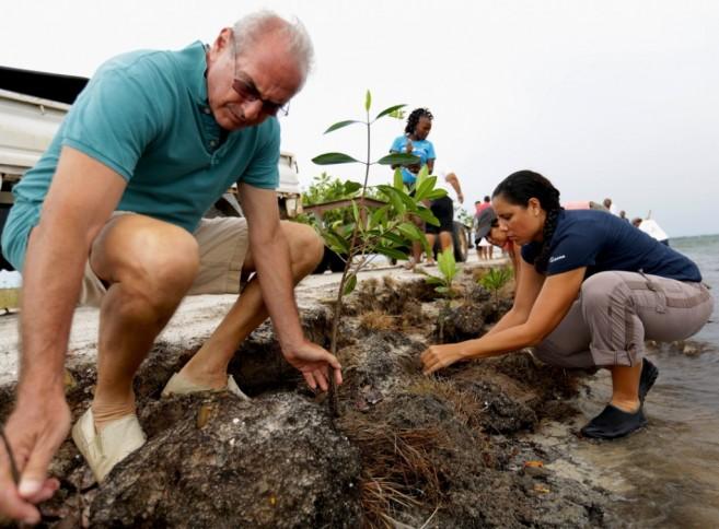 Placencia Mangrove Planting 3
