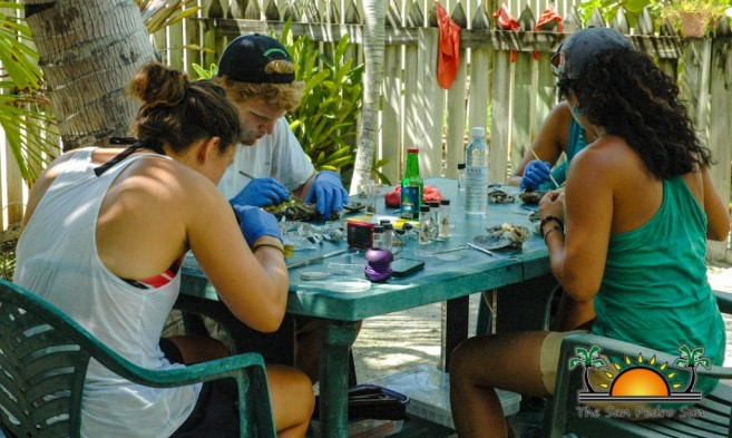 Scientific Study of Ambergris Caye Water-6