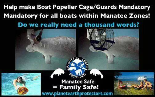 02 Manatees killed in 2014-3