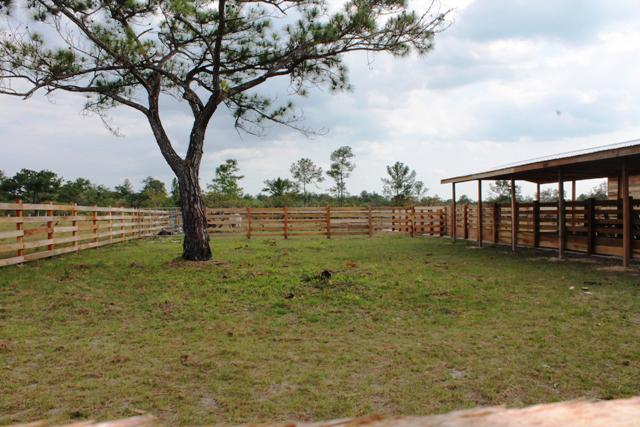 Communal Livestock Holding-2