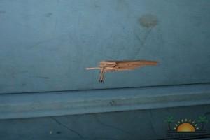 Bullet hole at the Escalante's apartment unit