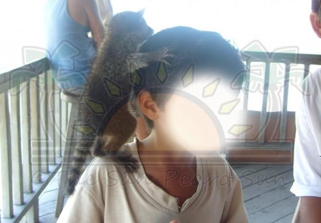 Wild-Animals-Pets-1