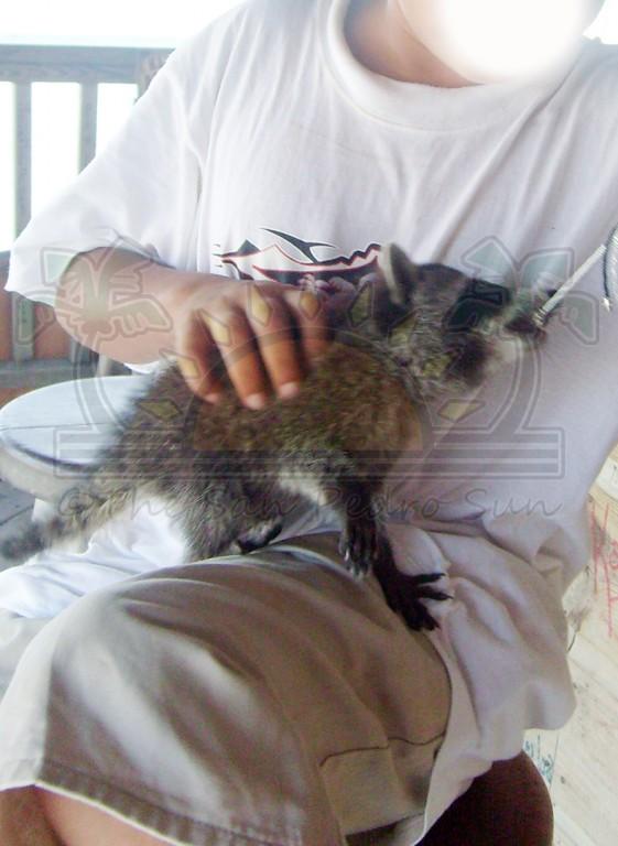 Wild-Animals-Pets-2
