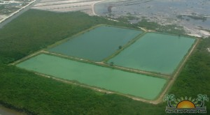 Sewage Treatment Ponds