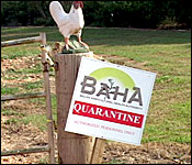 18 Poulty Farm Quarantine
