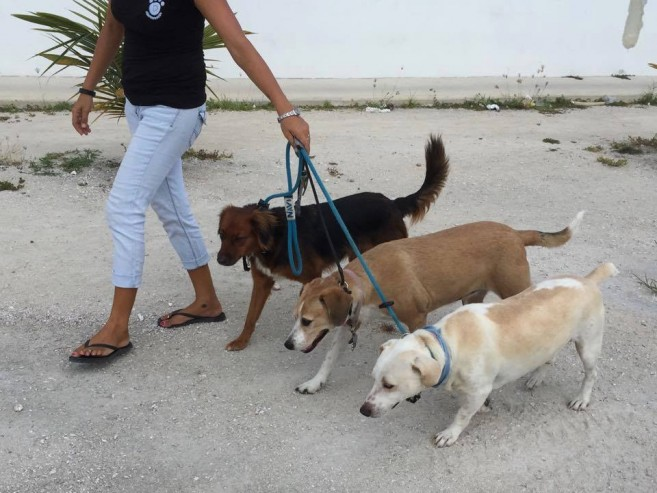 32 Dogs on leash