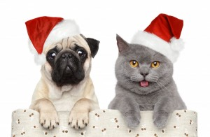 50 Holiday Dangers for pets