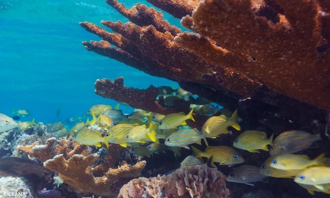 05 Reef Week