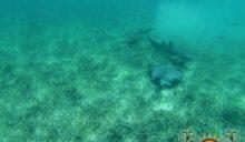 Jeff Bartl Shark Ray Alley Drowning