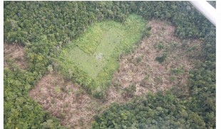 Aerial View of Guatemalan run marijuana plantation