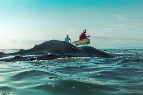 Humpback Whale found dead (2)