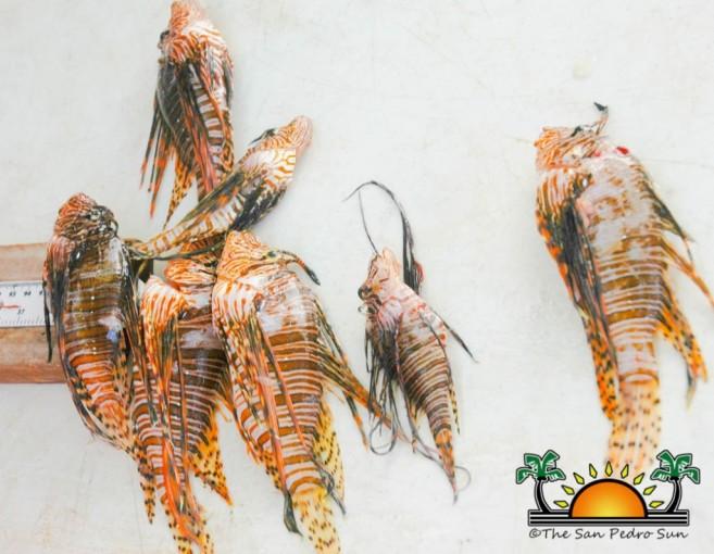 Reef Week Lionfish Tournamnet-3