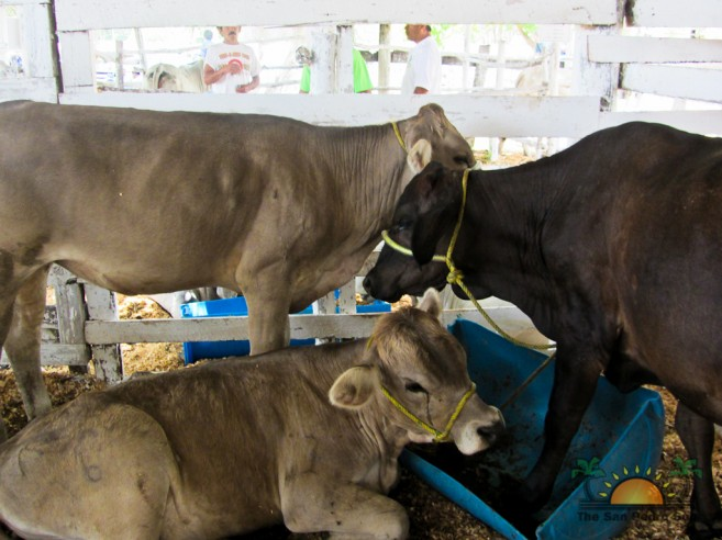 agricultural-trade-show-2012-24