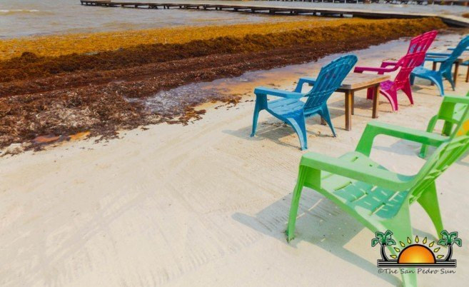 Ambergris Caye and the region once again threatened by Sargassum